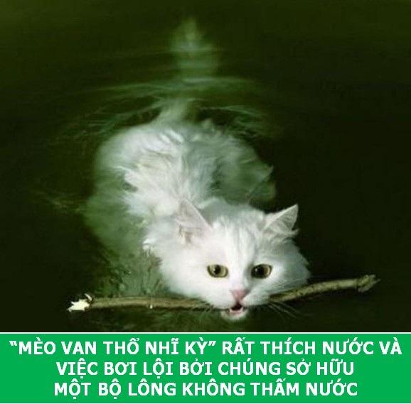 Những sự thật khoa học thú vị về loài mèo sẽ khiến bạn phải bất ngờ - Ảnh 5.