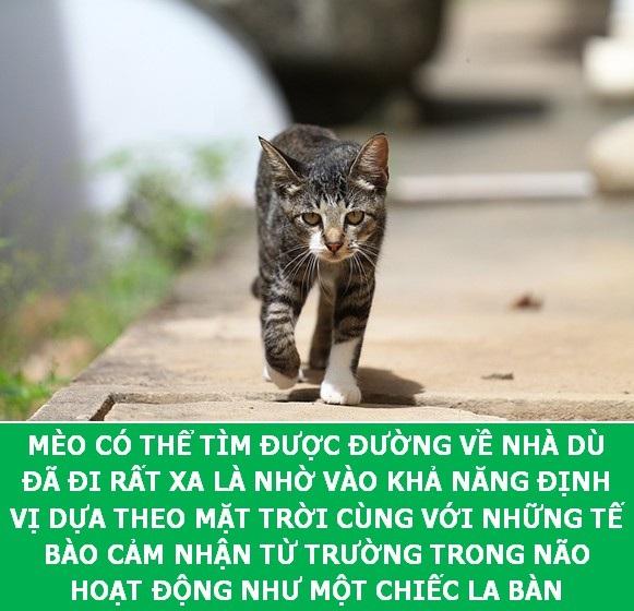 Những sự thật khoa học thú vị về loài mèo sẽ khiến bạn phải bất ngờ - Ảnh 6.