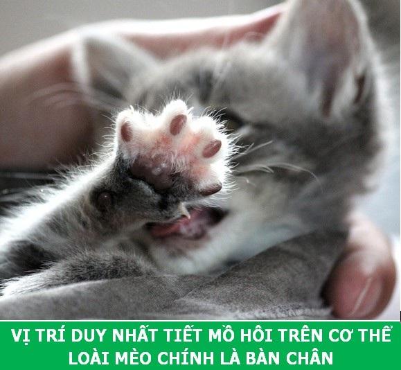 Những sự thật khoa học thú vị về loài mèo sẽ khiến bạn phải bất ngờ - Ảnh 8.