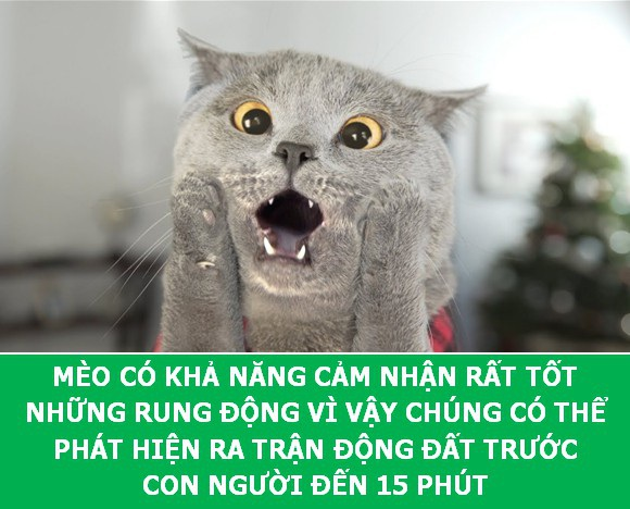 Những sự thật khoa học thú vị về loài mèo sẽ khiến bạn phải bất ngờ - Ảnh 9.