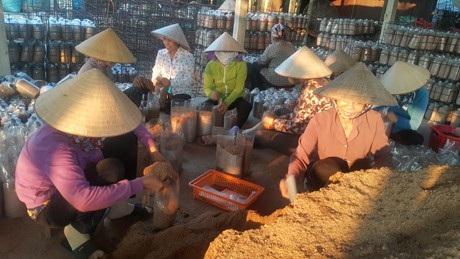Nam Định: Mỗi năm kiếm hơn nửa tỷ đồng nhờ trồng nấm sạch - 4