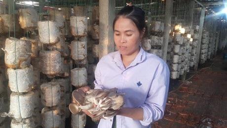 Chị Nguyễn Thị Huệ giới thiệu về mô hình trồng nấm bào ngư của gia đình.