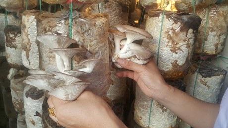 Nam Định: Mỗi năm kiếm hơn nửa tỷ đồng nhờ trồng nấm sạch - 2