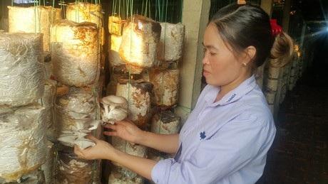 Nhờ trồng nấm sạch mà mỗi năm gia đình chị Huệ thu về hơn nửa tỷ đồng.