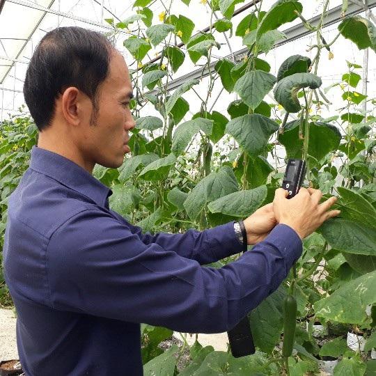 Anh Sơn sử dụng máy đo, kiểm tra dinh dưỡng của cây rau mỗi ngày