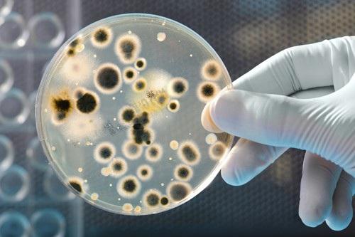 Loại bỏ vi rút HPV, viêm gan C nhờ liệu pháp miễn dịch? - 1