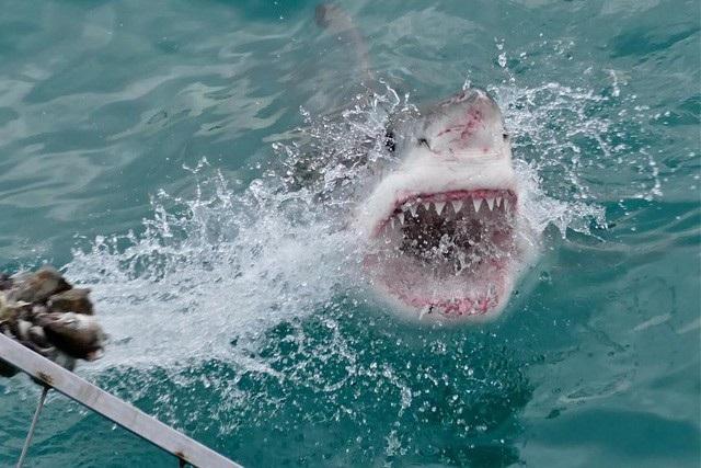 Trong năm nay liên tiếp xảy ra nhiều vụ cá mập tấn công con người