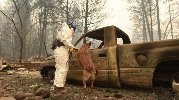 Hiện lực lượng cứu hộ vẫn ra sức tìm kiếm các nạn nhân trong vụ cháy rừng trong khi các đám cháy vẫn âm ỉ. (Ảnh: AFP)