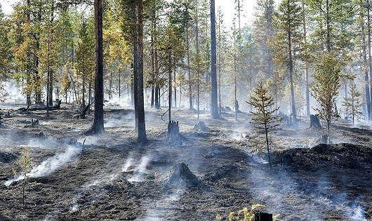 Khói bốc lên tại rừng ở khu vực Sarna, Thụy Điển trong đợt nắng nóng tại châu Âu năm 2018