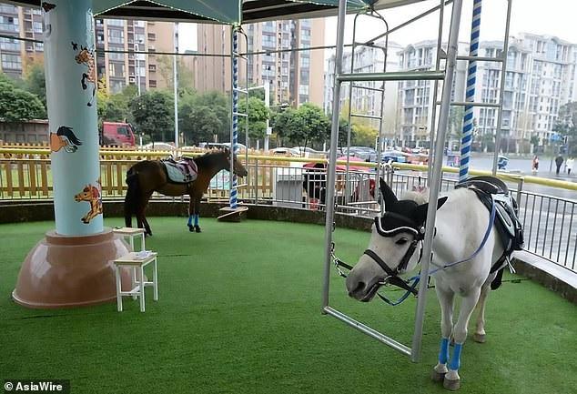 Riêng khu vui chơi này tại Trung Quốc lại dùng ngựa thật, thay thế ngựa gỗ