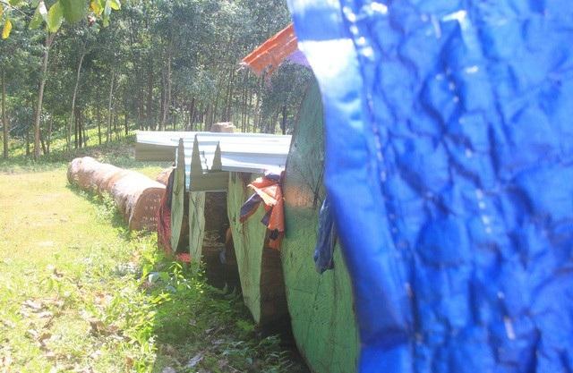 Hình ảnh hàng chục thân gỗ khủng xếp bên ngoài cổng biệt phủ ghi nhận vào thời điểm đầu tháng 11