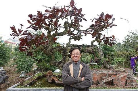 Ông Vĩnh bên cây bàng lá đỏ nổi tiếng của mình.