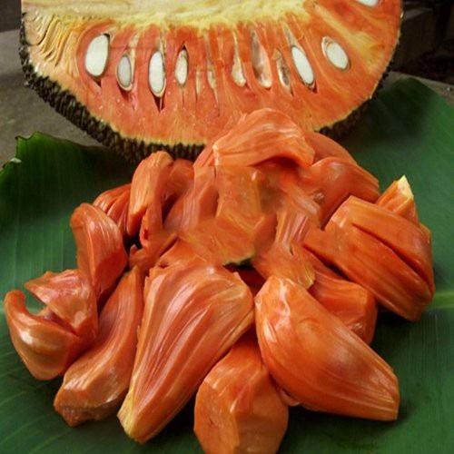 Mít ruột đỏ nhà ông Trắng trồng khi trái chín bổ ra nhiều múi, múi dầy, ít xơ và có màu đỏ rất đẹp.