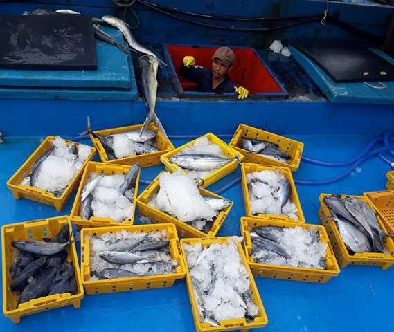 Những giỏ cá tươi từ biển.