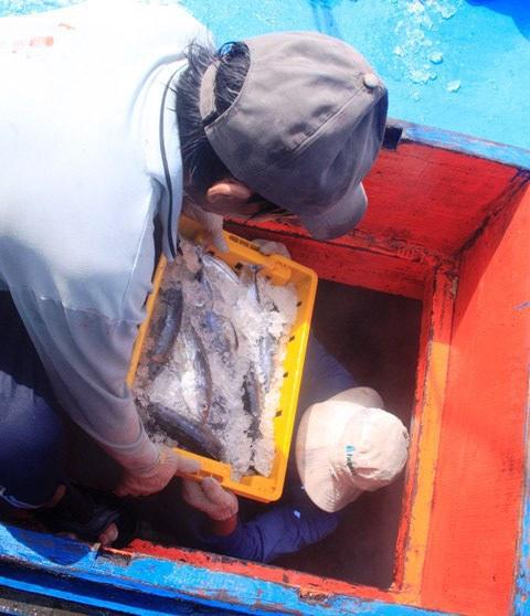 Ngư dân khẩn trương bán cá để neo tàu thuyền vào khu vực an toàn trú bão.