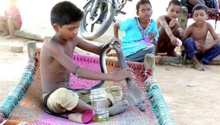 Cậu bé Devesh Adivasi gây kinh ngạc khi có những người bạn rắn thân thiết