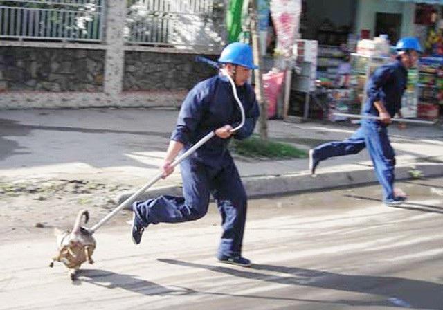 Đội bắt chó thả rông ở TP HCM
