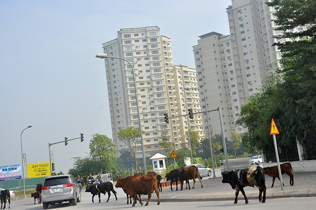Sự xuất hiện của Địa ốc Phú Long được kỳ vọng sẽ đem đến làn gió mới cho dự án Splendora. Bởi Phú Long được biết đến là một nhà phát triển bất động sản có tiềm lực của tỷ phú Nguyễn Phương Thảo.