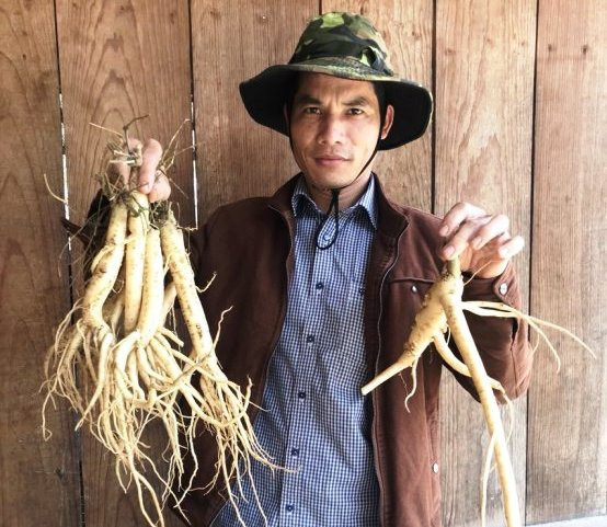 Chàng trai Hà Văn Đại đã mạnh dạn thử nghiệm đưa cây sâm dây đến với xứ Đà Lạt 2
