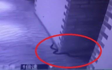 Hình ảnh con rắn độc trườn ngoài hành lang khách sạn được camera giám sát ghi lại