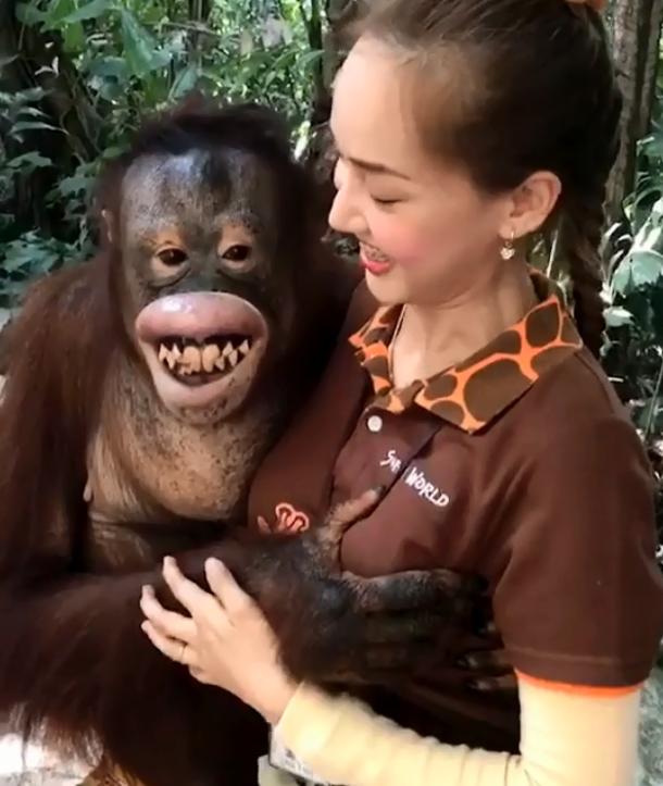 Ning Ning vốn là chú đười ươi rất thông minh và tinh nghịch ở vườn thú Safari World Park tại Bangkok, Thái Lan