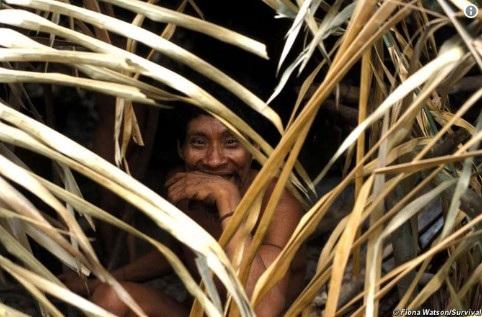 Một thành viên của bộ tộc Awá (Survival International)