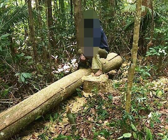 Khu vực rừng thuộc BQL rừng phòng hộ Đăk Đoa bị người dân vào rừng khai thác lâm sản trái phép để xây nhà