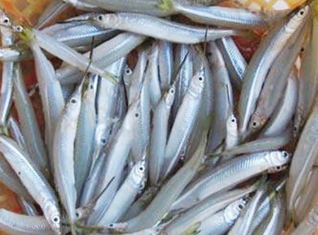 Từ loại cá ít ai ăn, nay rộ tin thu mua tiền triệu - 1