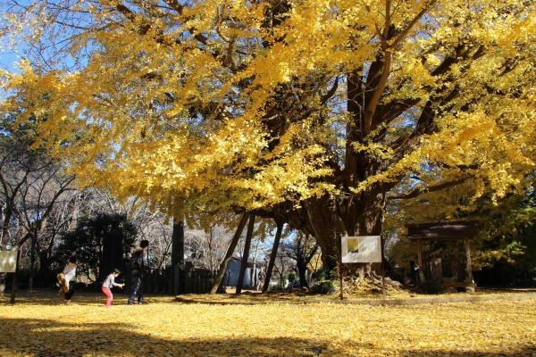 Những địa điểm ngắm lá vàng lá đỏ nổi tiếng nhất nước Nhật - 6