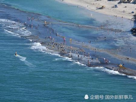 """Hàng nghìn người đổ xô đi """"đào kho báu"""" bào ngư miễn phí ở nơi này - 1"""
