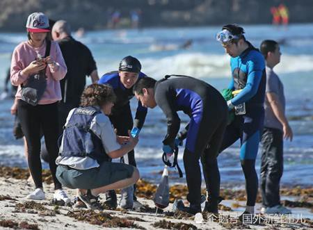 Người dân từ khắp nơi đổ xô đến bờ biển Perth nước Úc để săn bào ngư miễn phí