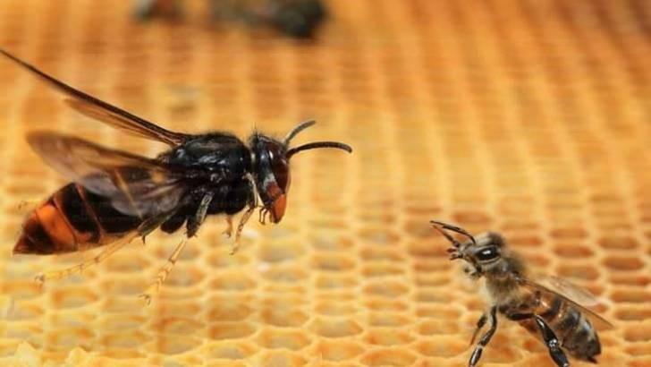 Xem Chim ưng của thế giới côn trùng bổ nhào chớp nhoáng tóm gọn con mồi - Ảnh 1.