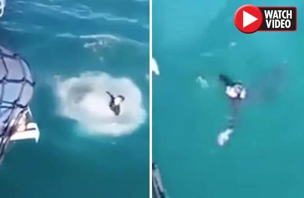 Thanh niên vội vàng bơi trở lại thuyền khi thấy cá mập.