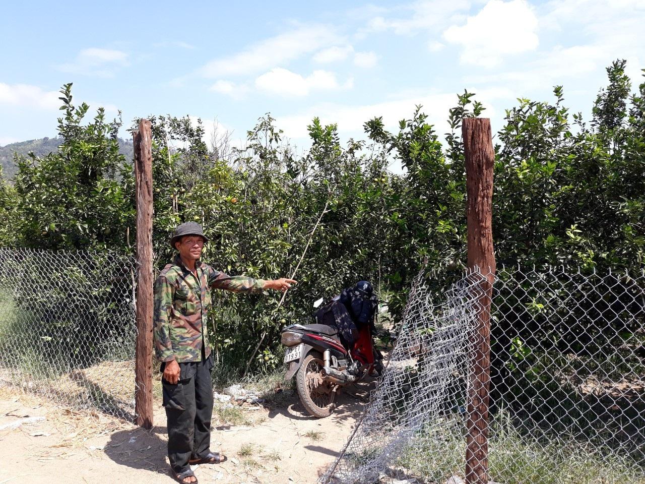 Đi lên từ vùng đất chết, lão nông thu hàng trăm triệu đồng từ cam sành - Ảnh 4.
