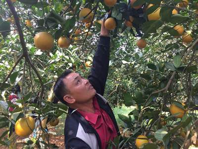Vốn Agribank góp phần xây dựng thương hiệu nông sản Việt - Ảnh 1.