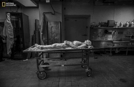 Bà Sue Potter đã tự nguyện để cơ thể mình bị cắt thành 27.000 phần
