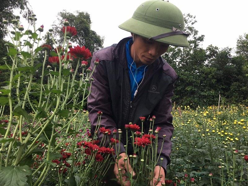 Thời tiết thất thường, nông dân lo mất vụ hoa Tết - Ảnh 5.
