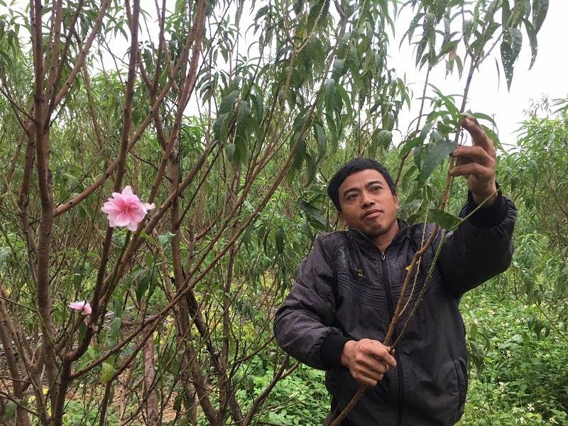 Thời tiết thất thường, nông dân lo mất vụ hoa Tết - Ảnh 8.