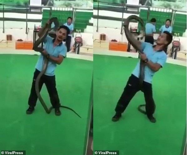 Kinh hãi nghệ sĩ biểu diễn rắn bất ngờ bị hổ mang tung cú cắn chết người - Ảnh 1.