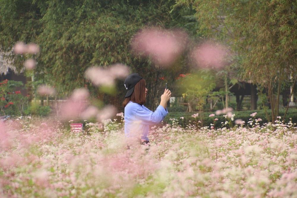 Vườn hoa tam giác mạch 5.000 m2 ở Hà Nội thu hút người tham quan - Ảnh 8.