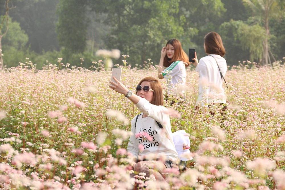 Vườn hoa tam giác mạch 5.000 m2 ở Hà Nội thu hút người tham quan - Ảnh 6.