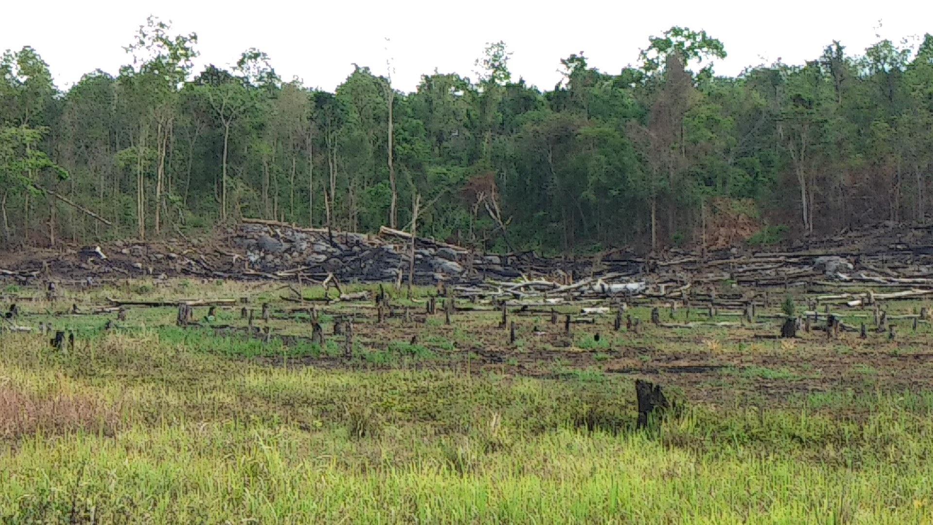 """Ban quản lý rừng Ayun Pa """"làm mất"""" hơn 550 ha rừng, chi sai hơn 1,6 tỷ đồng - Ảnh 1."""