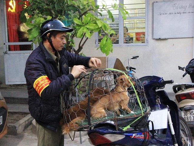Hà Nội dự kiến gắn chip để quản gần 500 nghìn con chó nuôi - Ảnh 1.