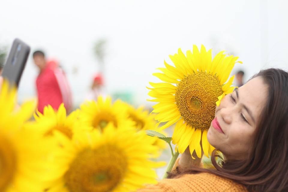 Giới trẻ Sài thành phát cuồng với vườn hoa hướng dương khổng lồ - Ảnh 2.
