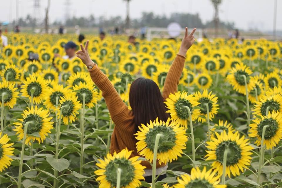Giới trẻ Sài thành phát cuồng với vườn hoa hướng dương khổng lồ - Ảnh 1.
