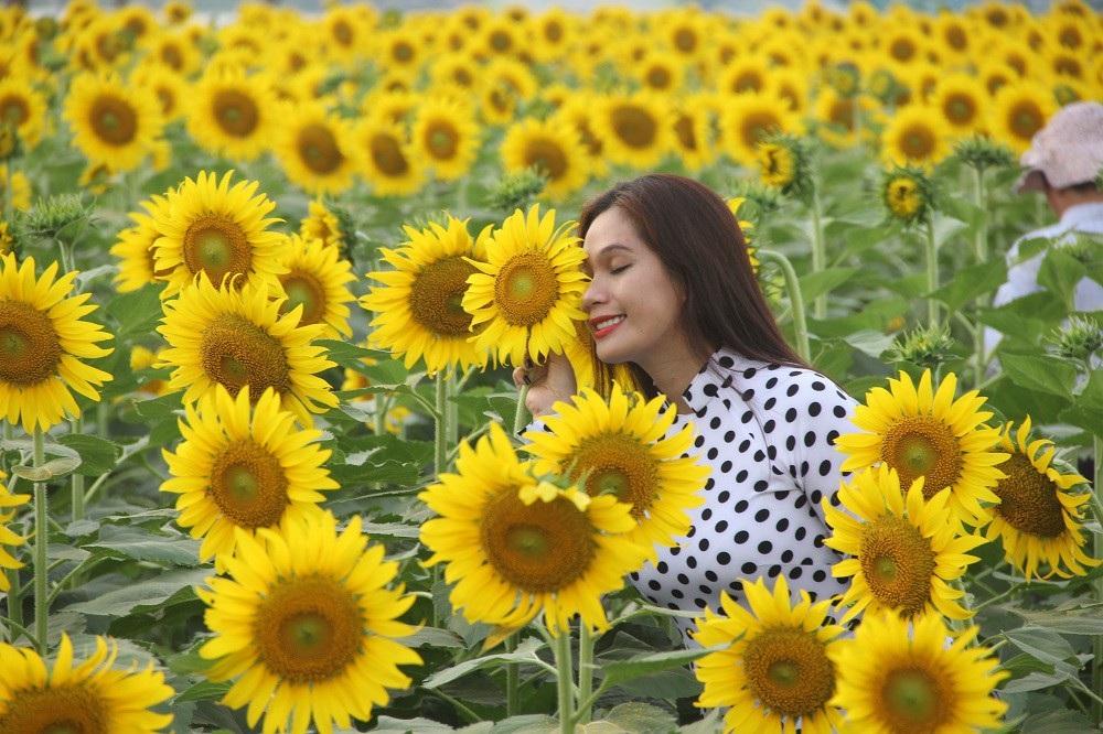 Giới trẻ Sài thành phát cuồng với vườn hoa hướng dương khổng lồ - Ảnh 4.