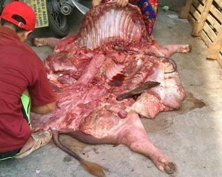 Dịch tai xanh bùng phát, chuyên gia cảnh báo tuyệt đối không xẻ thịt, ăn thịt lợn bệnh - Ảnh 1.