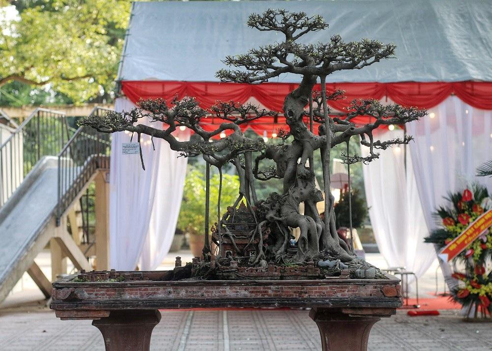 """""""Kỳ họa, dị thảo"""" hội tụ ở Hà Nội khiến dân chơi cây cảnh phát sốt - Ảnh 9."""