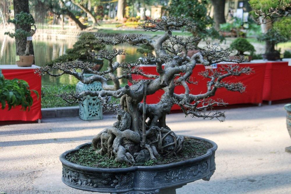 """""""Kỳ họa, dị thảo"""" hội tụ ở Hà Nội khiến dân chơi cây cảnh phát sốt - Ảnh 8."""
