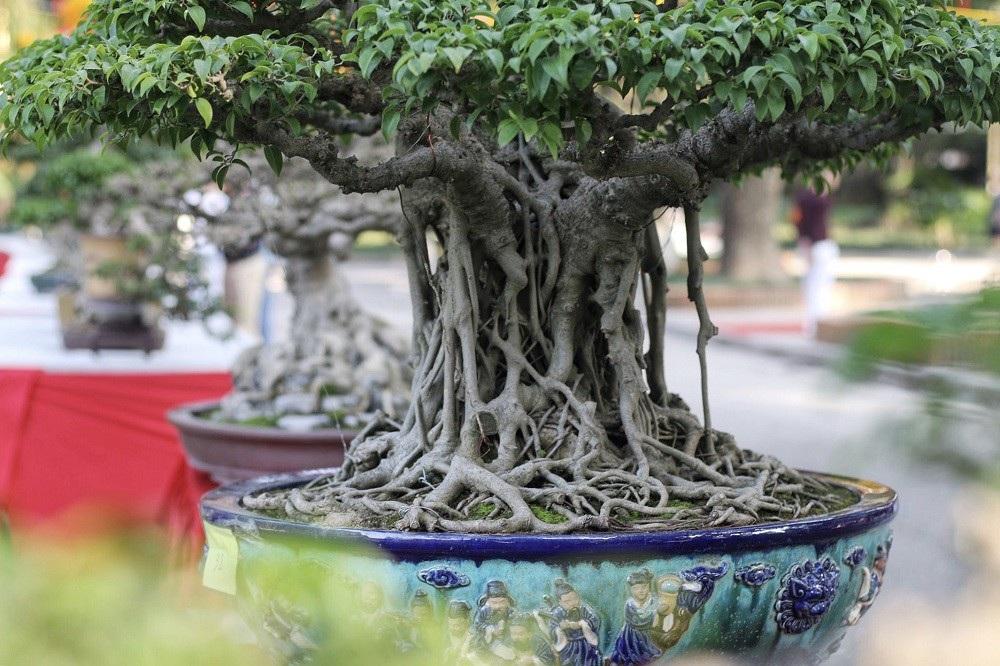 """""""Kỳ họa, dị thảo"""" hội tụ ở Hà Nội khiến dân chơi cây cảnh phát sốt - Ảnh 7."""